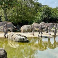 Un p'tit tour dans l'Indre! Zoo de Beauval-château de Valençay